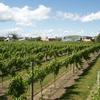 Margrain Vineyard Villas